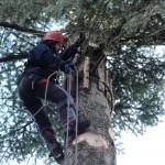 Protecció de fusta per protegir l'arbra dels ancoratges